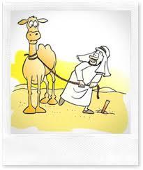camel tied